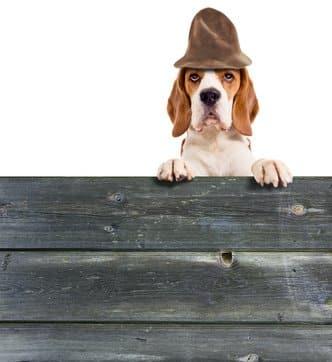 Hundezaun und Hundeabsperrgitter