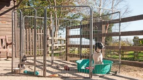 Hunde im Welpenauslauf