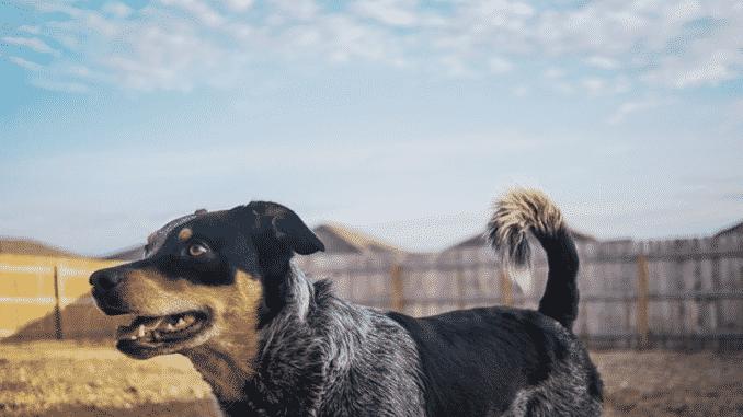 hunde-zaun