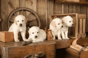 Welpenauslauf für hundewelpen