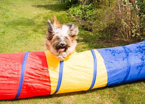 Agility mit Hund im eigenen Garten