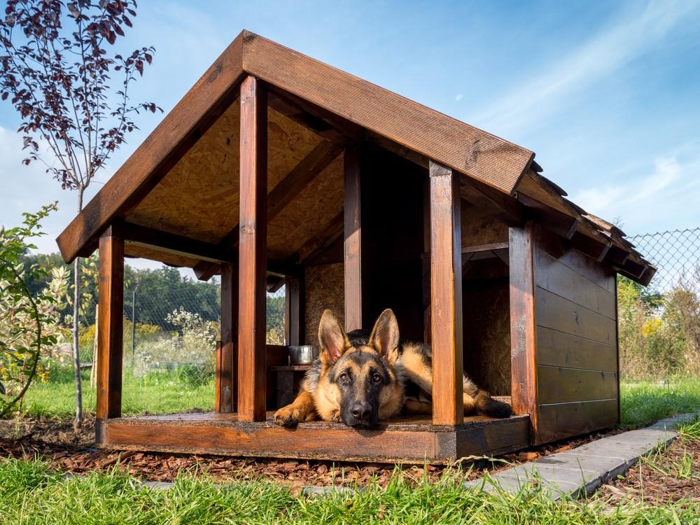 Ruheplatz im Garten - die Hundehütte