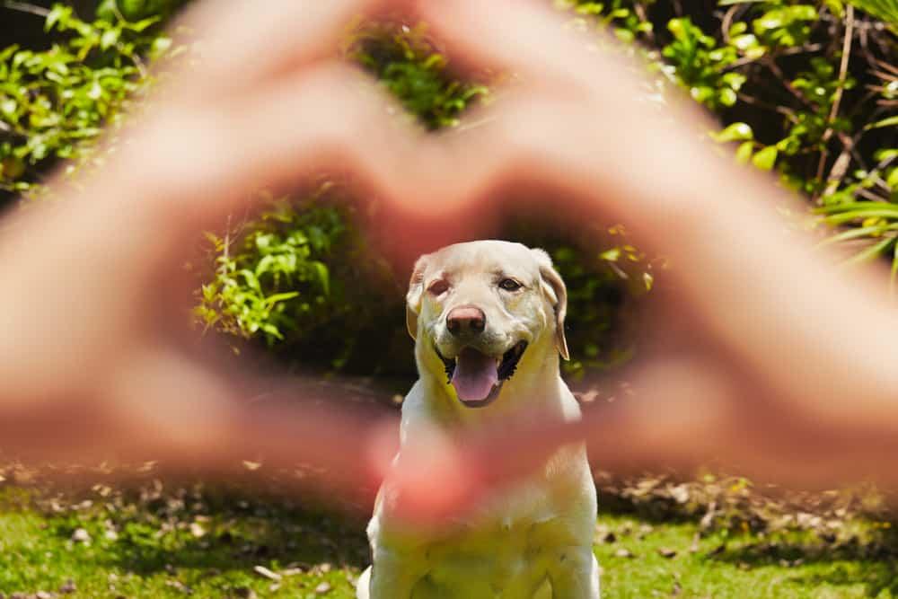 Hund im Garten - So machst du den Garten hundesicher