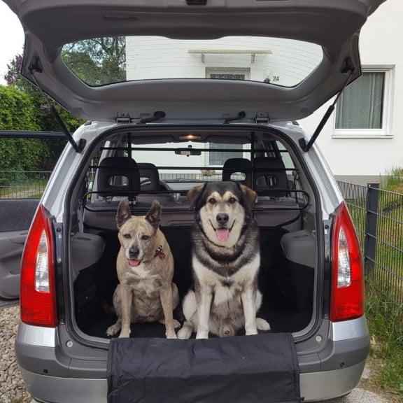 Auto Hundegitter