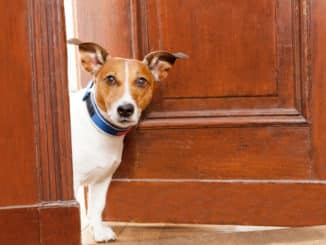 Hunde Türschutzgitter ohne Bohren