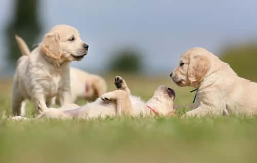 Hundezaun Hundeabsperrgitter Mobiler Hundezaun