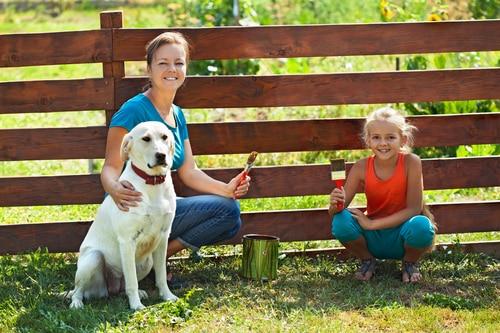 Hunde Gartenzaun