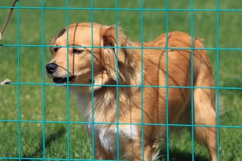 mobiler Hundezaun - flexibler hundezaun